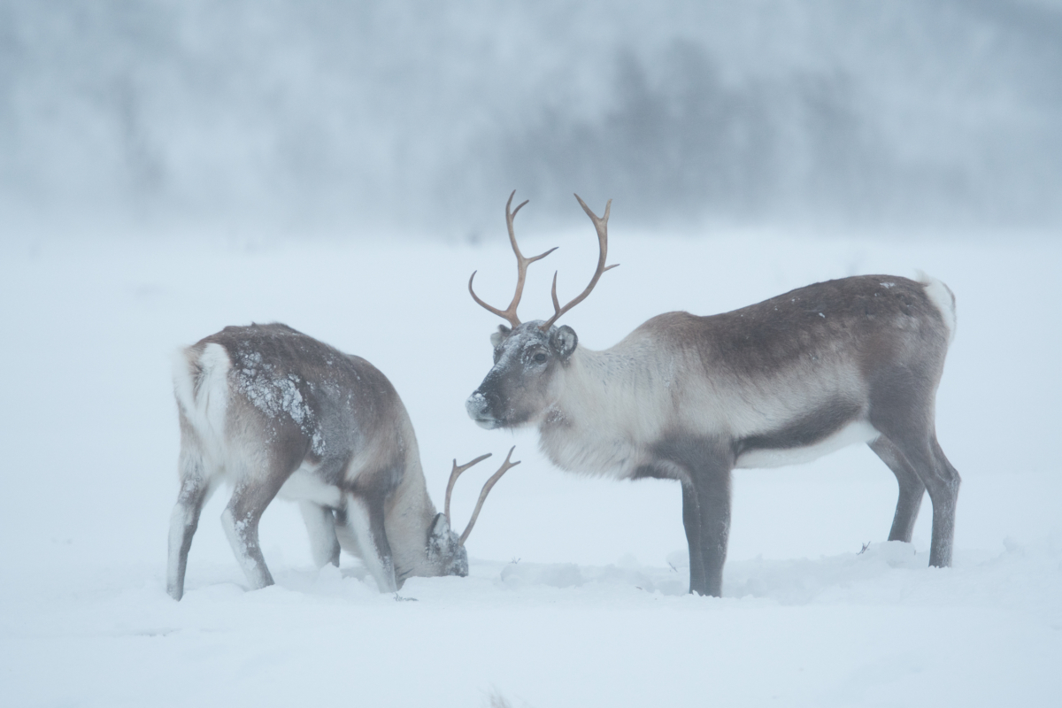 Photo: Knut Sverre Horn