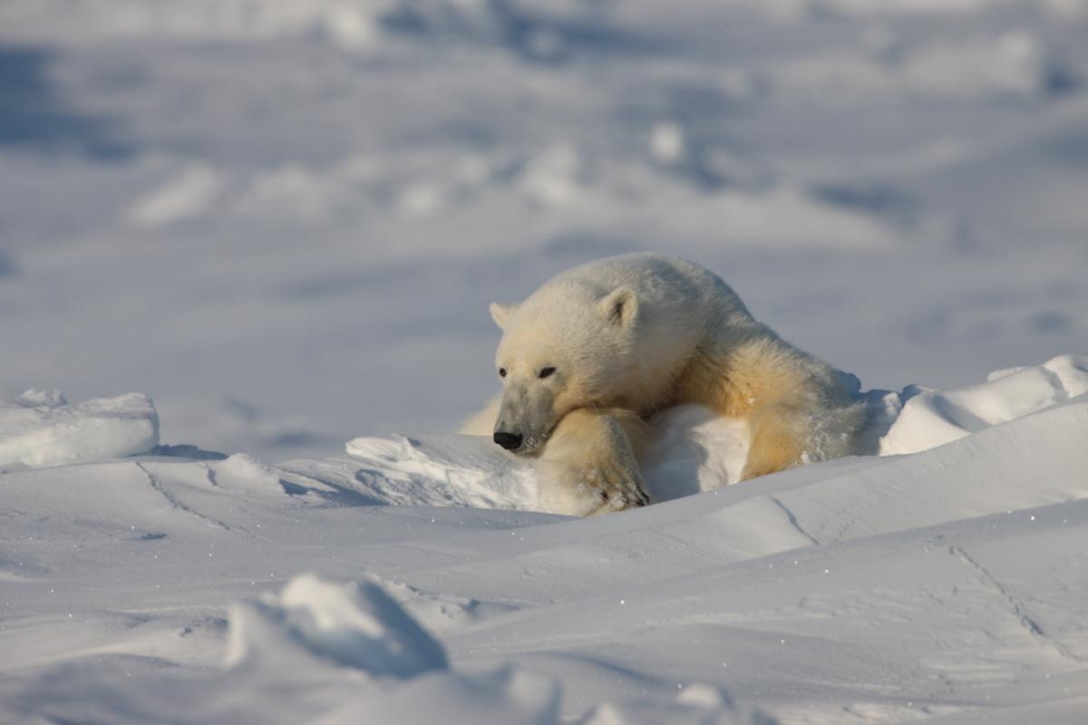 Photo: Polar X